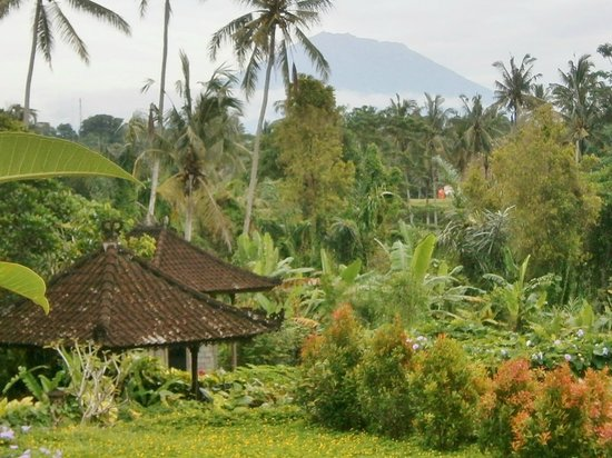 Ubud Green:                                     View from Firefly Cafe