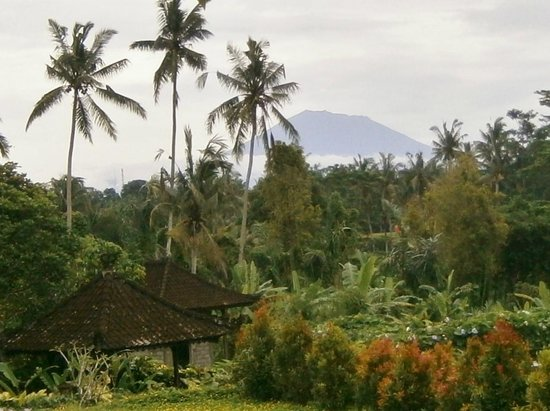Ubud Green :                                     View from Firefly Cafe
