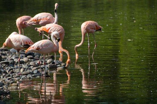 General Roca, อาร์เจนตินา:                   Flamencos en el aviario