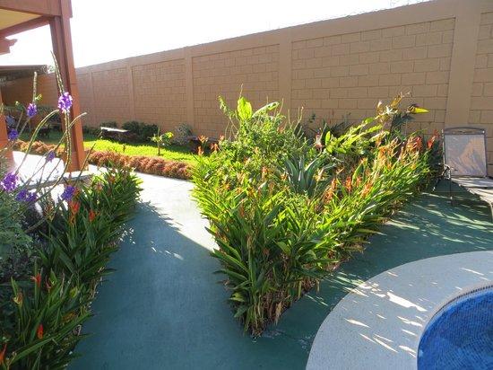Casa Marin B&B : Garden