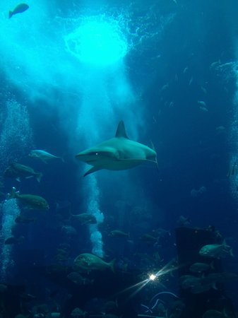 Atlantis, The Palm: Lost Chambers
