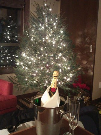 Evolution:                   Real pine Christmas tree & Champagne