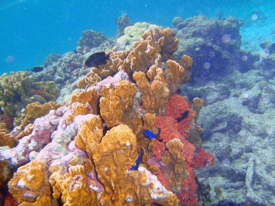 ديفي فلامنجو بيتش ريزورت آند كازينو:                   coral snorkeling off klein bonaire                 