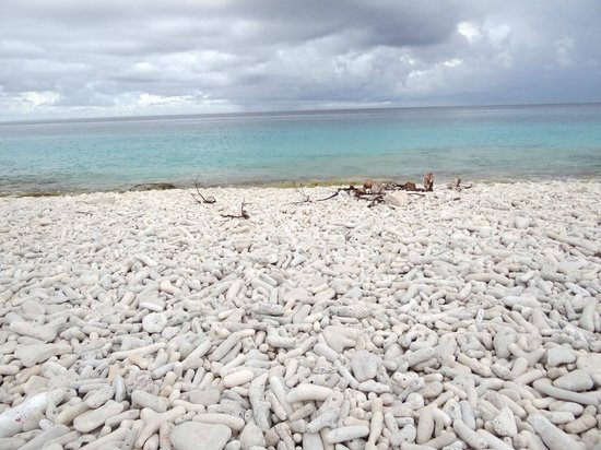 ديفي فلامنجو بيتش ريزورت آند كازينو:                   coral beach near pink beach on bonaire                 