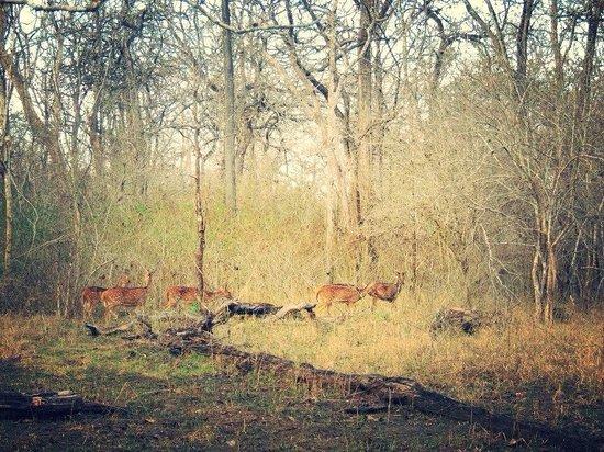 Orange County Resorts Kabini: The National park