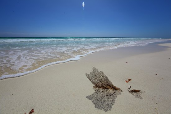 Cabanas Tulum:                   Tulum beach