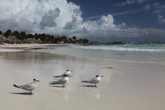 Cabanas Tulum:                   Beach
