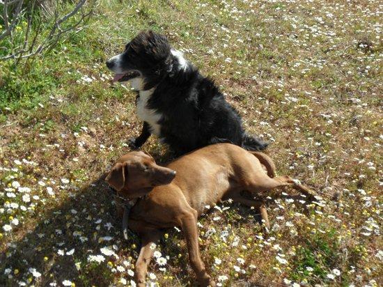 Quinta da Pedra B&B: Our dogs