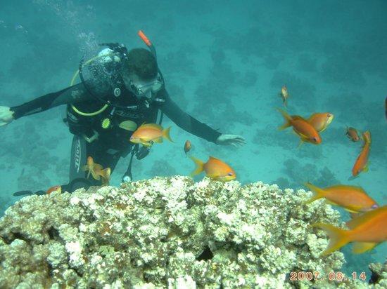 Scuba Tribe diving center:                   Exploring