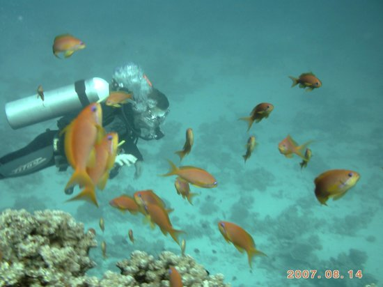 Scuba Tribe diving center:                   Thinking im a fish