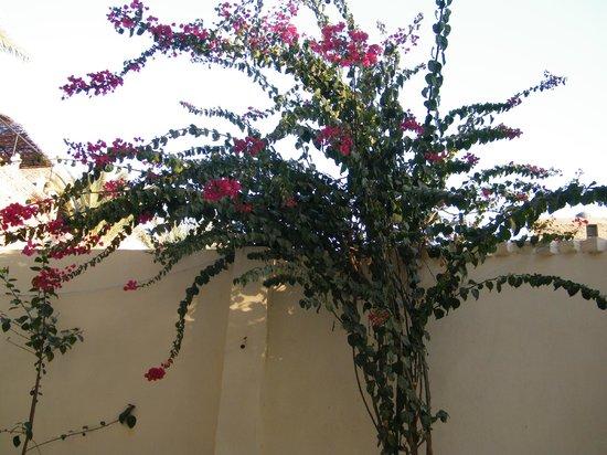 Hotel Sheherazade:                   hotel courtyard