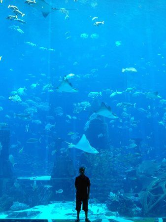 Atlantis, The Palm:                   fish tank