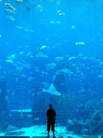 فندق اتلانتس ذا بالم:                   fish tank                 