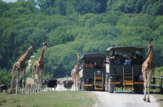 Lympne, UK: Safari on The African Experience