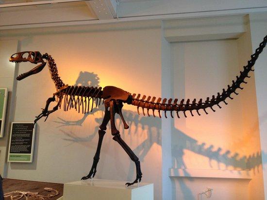 New Walk Museum and Art Gallery:                   Dinosaur us
