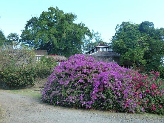 Habitation Clement:                                     Allée du jardin