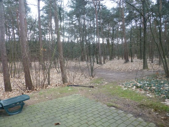 Center Parcs De Kempervennen:                   View from living area in lodge 54
