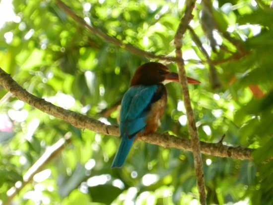 Gems Garden Guest House & Restaurant:                   Kingfisher in a tree outside our room
