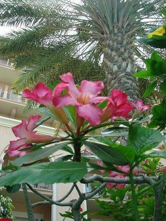 The Ritz-Carlton, Dubai:                   Original, non-copyrighted images Non-commercial Virus-free