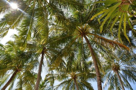 Kuramathi Island Resort:                                     Flora
