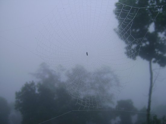 High View Resort :                                     A spider in the nature