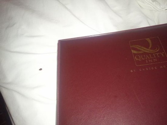 Econo Lodge North:                                                                         Bed bugs