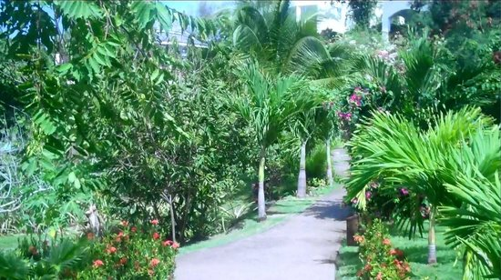 Calabash Cove Resort and Spa:                   Path from our cottage to the beach