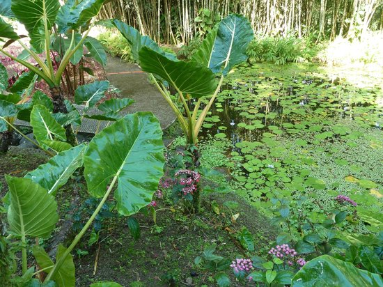 Jardin japonais picture of jardin de balata fort de for Jardin balata