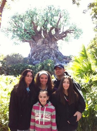 Homewood Suites Orlando-International Drive/Convention Center:                   tree of life