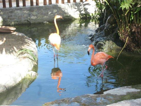 IFA Villas Bavaro Resort & Spa:                   Территория отеля