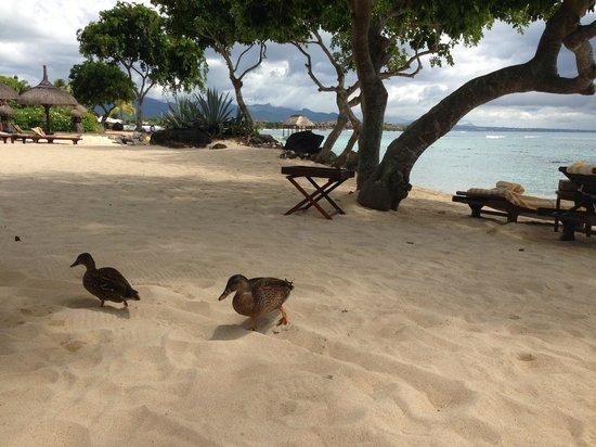 The Oberoi, Mauritius:                   отель