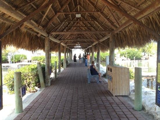 Dolphin Research Center:                   dolphin area covered walk way