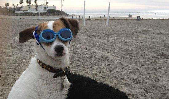 Houdini at Dog Beach, Jan 2013