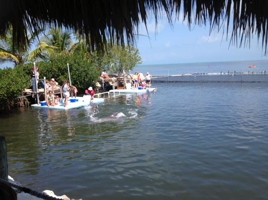 Dolphin Research Center:                   painting dolphine