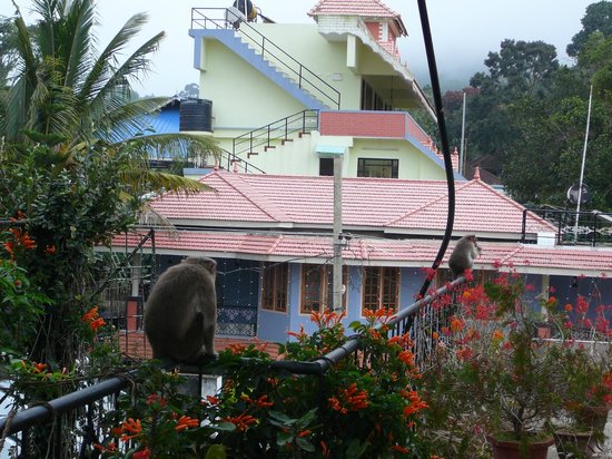 Suresh Green View Homestay:                                     Singes au reveil