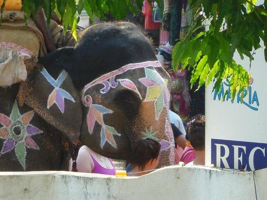 Colonia Santa Maria (CSM):                   Elephant outside our room?