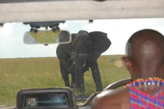 Oloshaiki Camp:                   Bernard driving us towards the elephants...