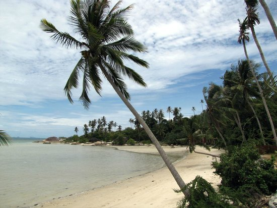 Beck's Resort:                   beach