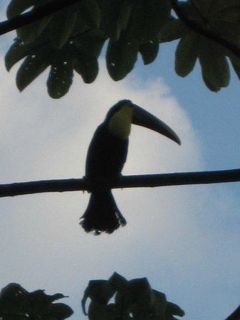 Oxygen Jungle Villas:                   toucan outside our villa