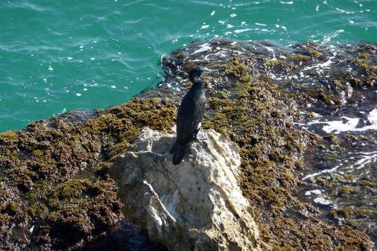 Hotel Mediterraneo Benidorm :                   vue du rocher