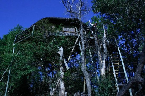 ‪‪Marc's Treehouse Lodge‬:                   Casita del Arbol en las alturas
