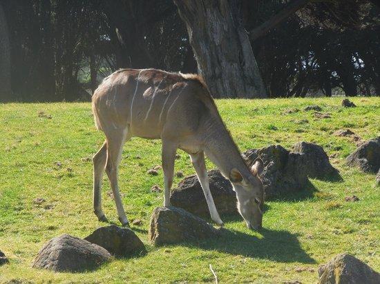 San Francisco Zoo:                   SF Zoo - African Savannah