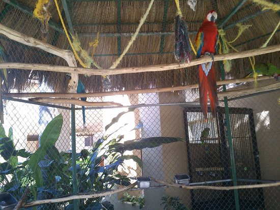 Paradise Village Beach Resort & Spa: Guacamayas