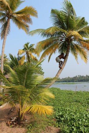 Breeze Backwater Homes : Coconut