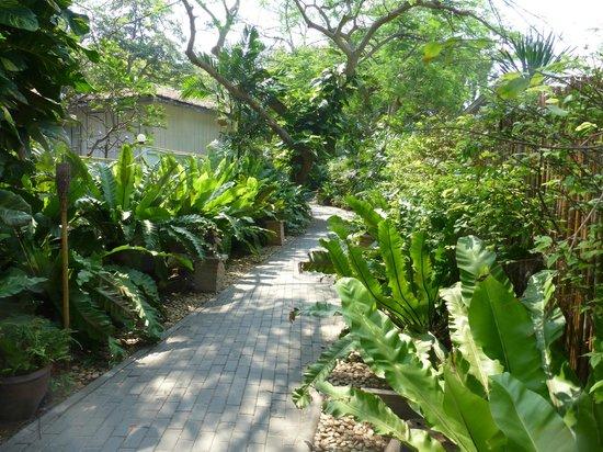 بان لاكساسوبها ريزورت:                   Garden                 