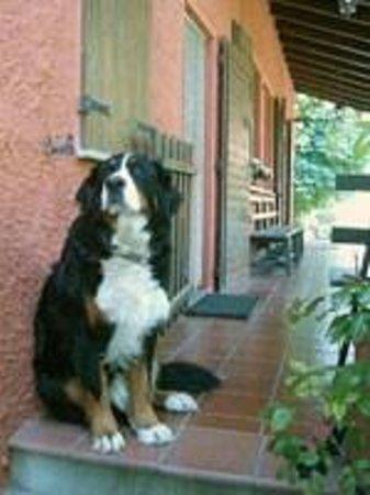 Agriturismo Fattoria Quercia:                   il cane della fattoria