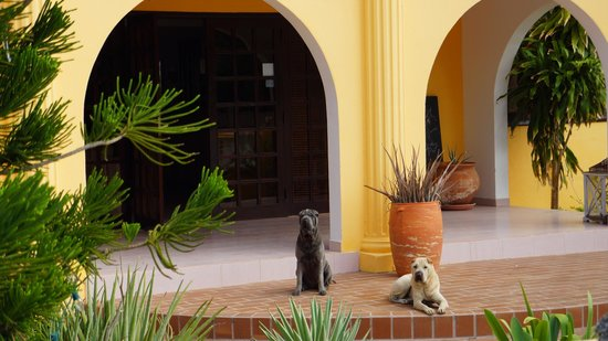 Hotel Restaurant Roomer:                   Blue (left) joins RoomeR Chief of Security Senna (right) on staff!