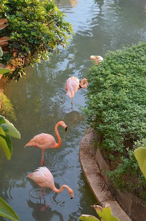 Pueblo Bonito Emerald Bay:                   I love watching the flamingos.
