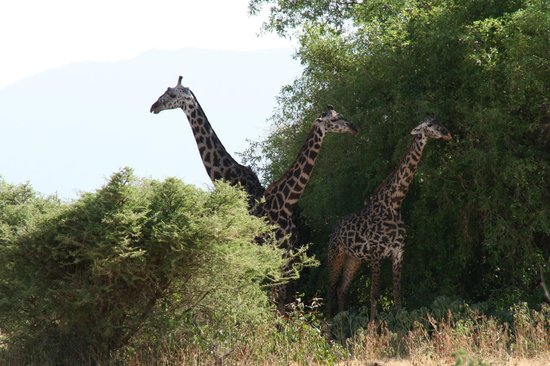 Full-Day Lake Manyara National Park Tour: Safari