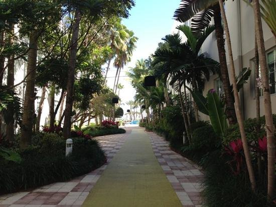 Kimpton Surfcomber Hotel:                   walk to pool from lobby